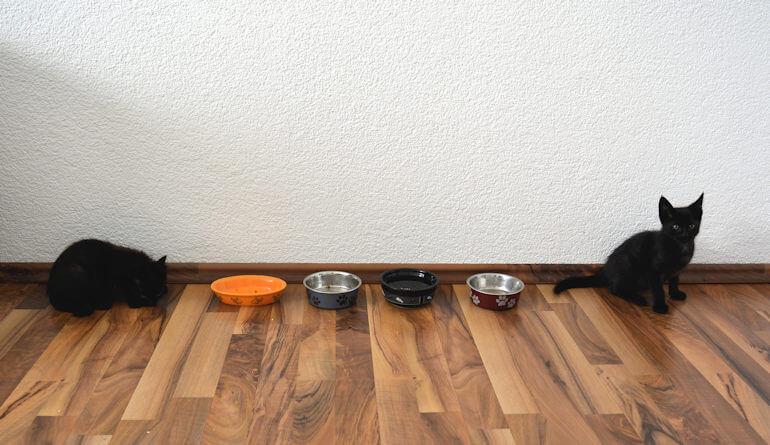 Katzen und ihre Näpfe