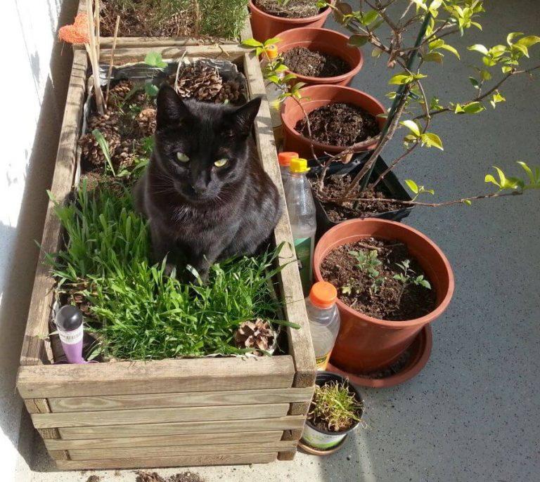 https://wohnungskater.de/wp-content/uploads/2019/05/Katze.im_.Katzengras.jpg