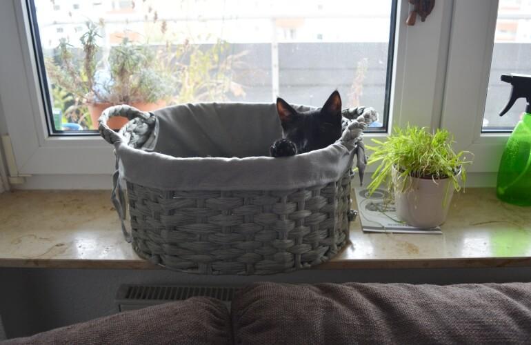 Katze in Korb