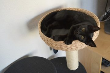 Cat on a cat tree