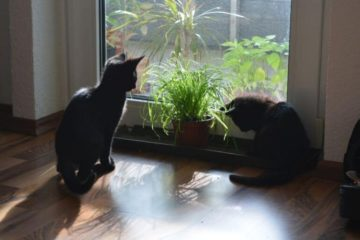 Cats with cat grass
