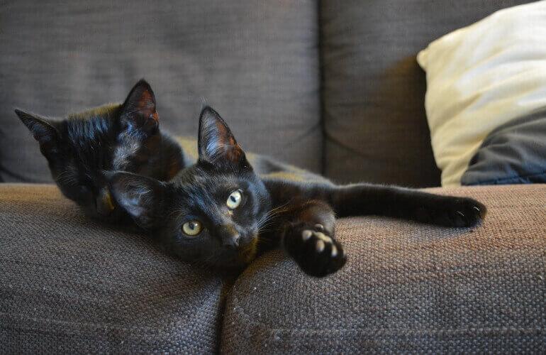 Zwei Katzen auf Sofa