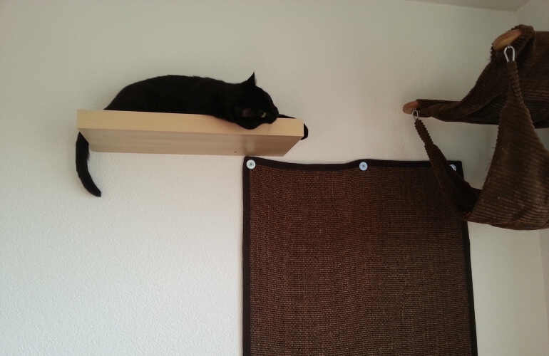 A cat on a shelf with a climbing carpet