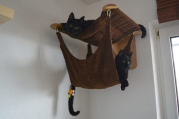 Cats on their vertical space.