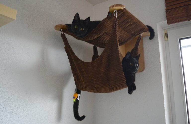 Cats testing their cat hammock.