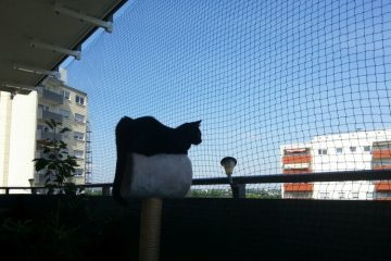 Cat looking out on balcony