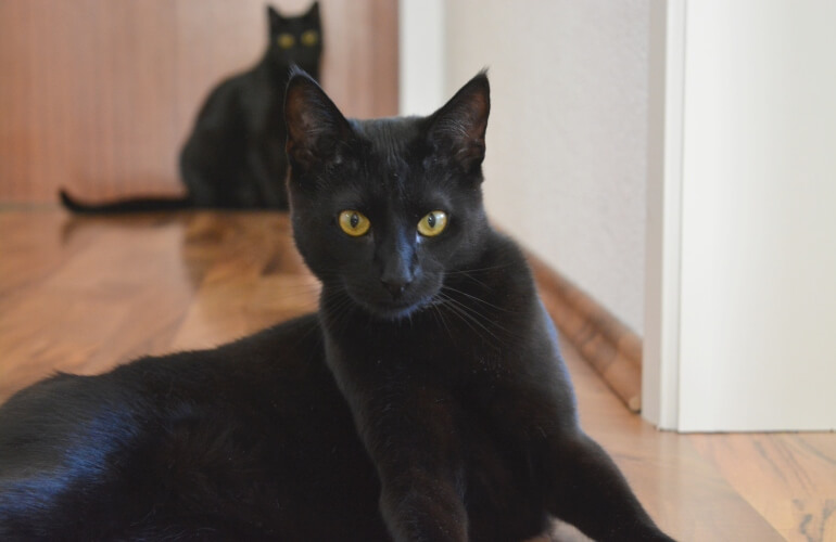 Two black cats in a hallway