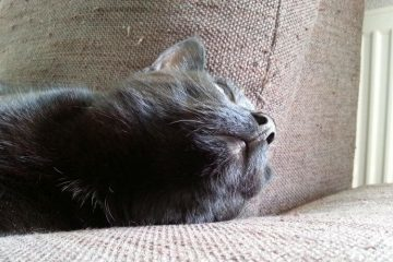 A cat on a sofa, just the head