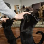 A short guide for clicker-training your cats