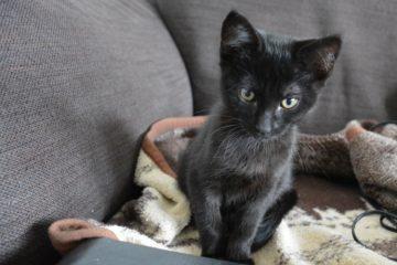 Black cat on a sofa