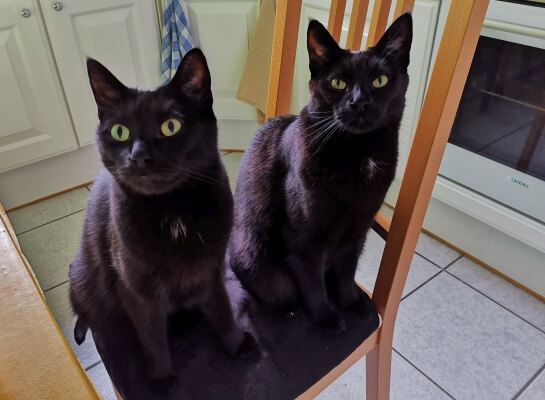 Two cats on a chair